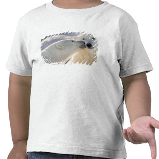 Canada, Manitoba, Hudson Bay, Churchill. Polar Shirts