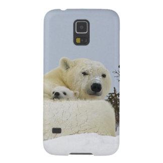 Canada, Manitoba, Wapusk National Park. Polar 8 Galaxy S5 Covers