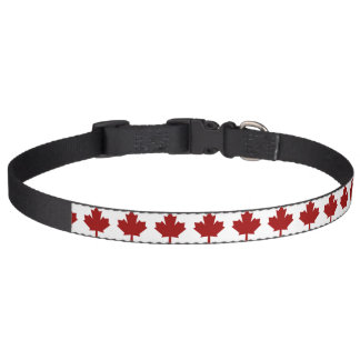 Canada maple leaf in red pet collar