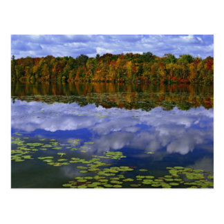 Canada, Ontario. Autumn color reflects in Park Postcard