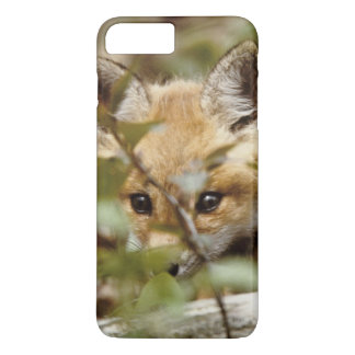 Canada, Point Pelee National Park. Young red fox iPhone 7 Plus Case