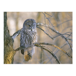 Owl Gifts Owl Gift Ideas On