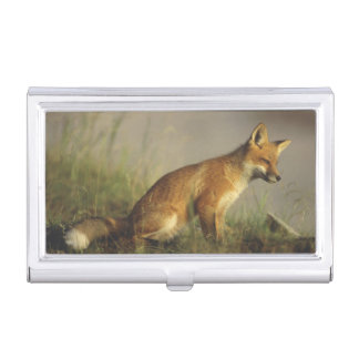 Canada, Quebec. Red fox cub at sunrise. Credit Business Card Holder