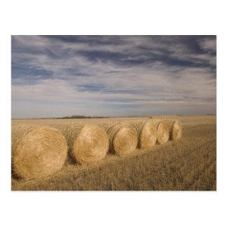 Canada, Saskatchewan, Craik: Hayrolls / Autumn Postcard