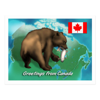 Canadian Black Bear Postcard