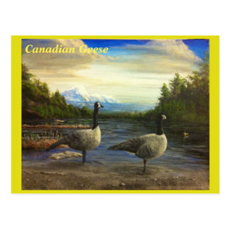 Canadian Geese at Beaver Lake. - postcard