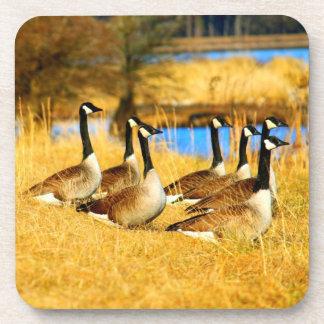 Canadian Geese Bird Wildlife Cork Drink Coasters