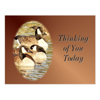 Canadian Geese blank Postcard- customize Postcard