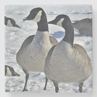 Canadian Geese Coasters - Customize It! Stone Beverage Coaster