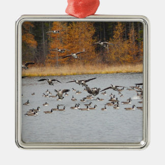 Canadian Geese Coming In For A Landing Metal Ornament