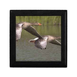 Canadian Geese Gift Box