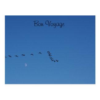 Canadian geese in flight postcard