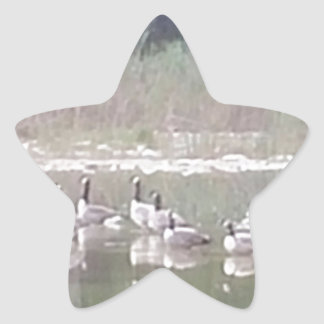 Canadian Geese in the Pond Star Sticker