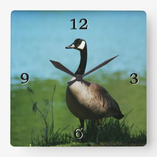 Canadian Geese Photo Square Wall Clock