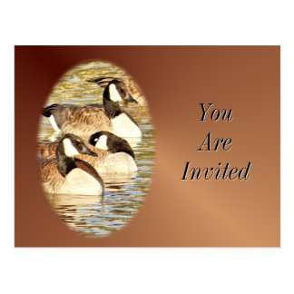 Canadian Geese Postcard-Invitation-customize Postcard