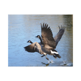 Canadian Geese Taking Flight Canvas Print