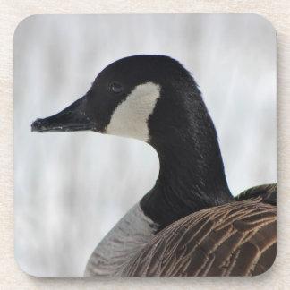 Canadian Goose Beverage Coasters