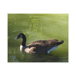 Canadian Goose Canvas