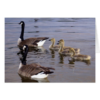 Canadian Goose Family Card