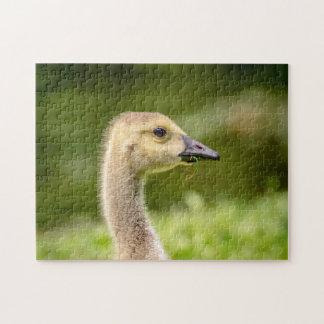 Canadian Goose (Gosling) Jigsaw Puzzle