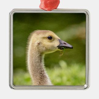 Canadian Goose (Gosling) Metal Ornament