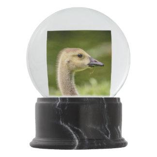 Canadian Goose (Gosling) Snow Globe