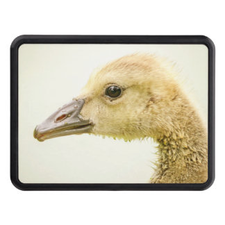 Canadian Goose (Gosling) Trailer Hitch Cover