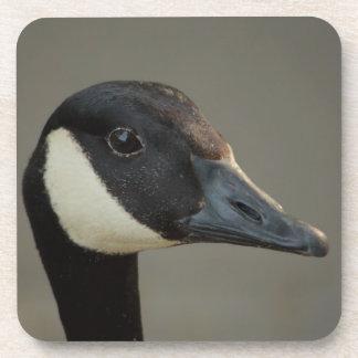 canadian goose portrait drink coasters