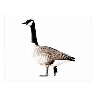 Canada Goose chateau parka outlet cheap - Cool Canadian Cards, Photocards, Invitations & More