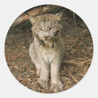 Canadian Lynx 0173 Sticker
