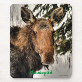 Canadian Moose Portrait Funny Wildlife Mousemat Mouse Pad