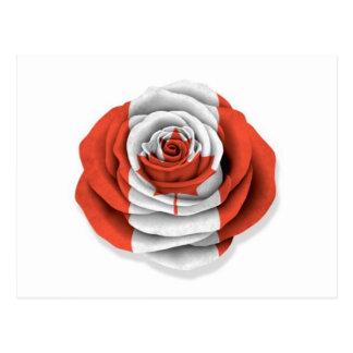 Canadian Rose Flag on White Postcard