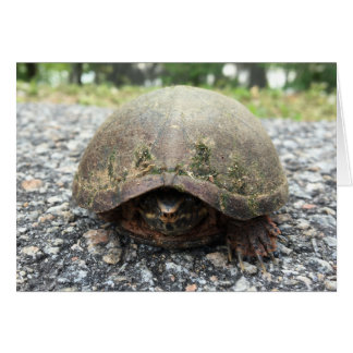 canal turtle notecard