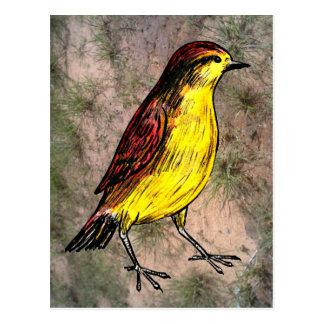 Canary Bird Postcard