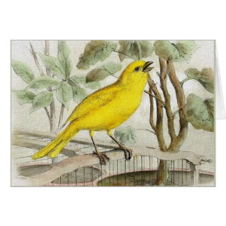 Canary Vintage Illustration Card