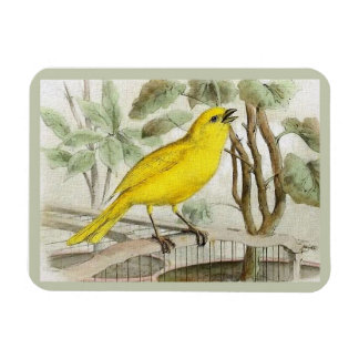 Canary Vintage Illustration Magnet