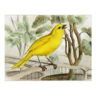 Canary Vintage Illustration Postcard