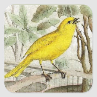 Canary Vintage Illustration Square Sticker