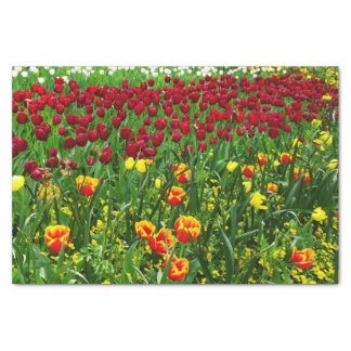 "Canberra Tulips 10"" X 15"" Tissue Paper"