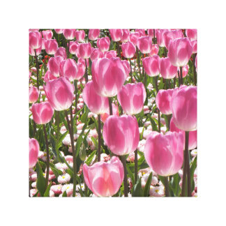Canberra Tulips Stretched Canvas Prints