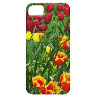 Canberra Tulips iPhone 5 Cover
