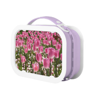 Canberra Tulips Lunchbox