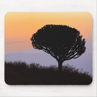 Candelabra Tree silhouetted at sunrise, Mouse Pad