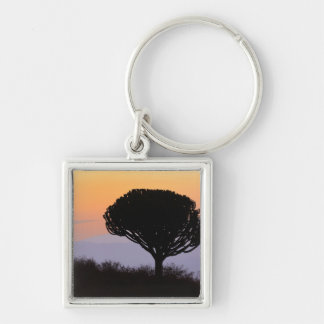Candelabra Tree silhouetted at sunrise, Silver-Colored Square Keychain