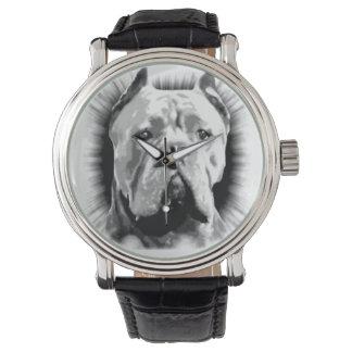 Cane Corso Dog Watch