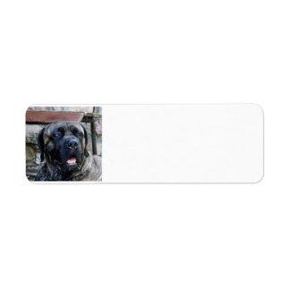 cane corso grey brindle