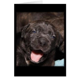 Cane Corso Mastiff Puppy Card