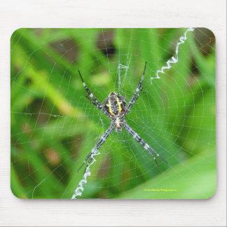 Cane spider - Big Island mousepad