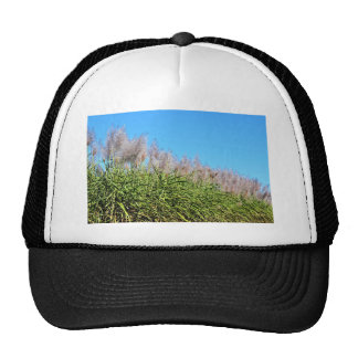 CANE SUGAR TOPS QUEENSLAND AUSTRALIA TRUCKER HAT