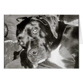 Canine Card
